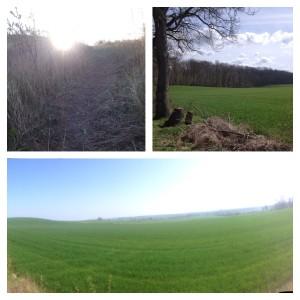 Løb i Hedeland, Boserup og Lejre